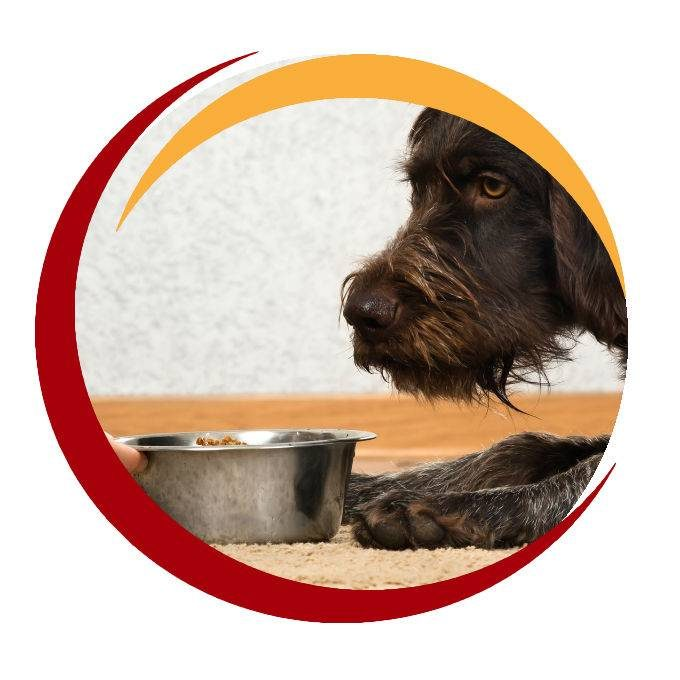 Dog Being Served Food