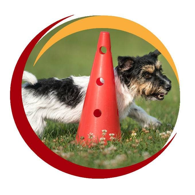 Small Dog Running Round A Cone